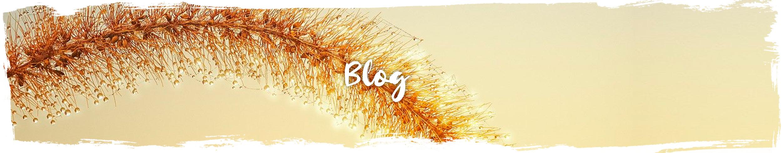 blog-yogamemucho