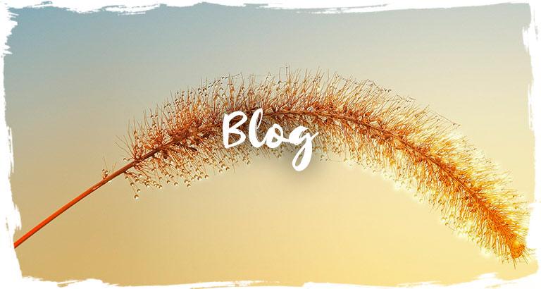 blog de yoga